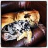 Histoire de famille - Chapitre 4 - Les chiens de mon frère