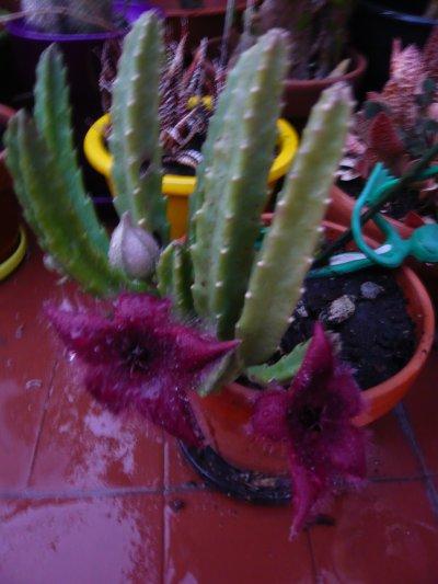Fleuraison été 2011