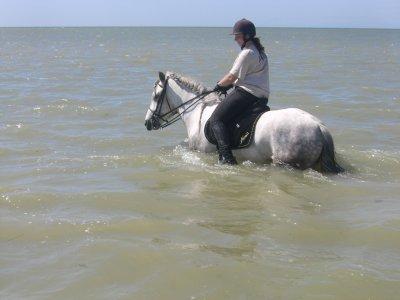 Baie de Somme : 9 au 12 août 2010