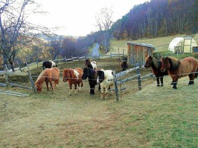 les poneys de mon centre
