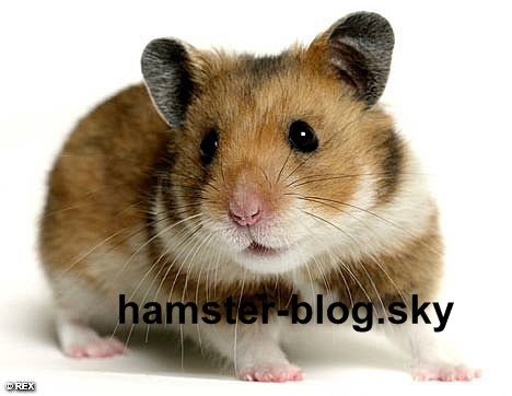 Blog de hamster-blog