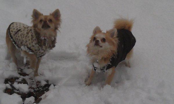 Les plus Beau dans la Neige :-)