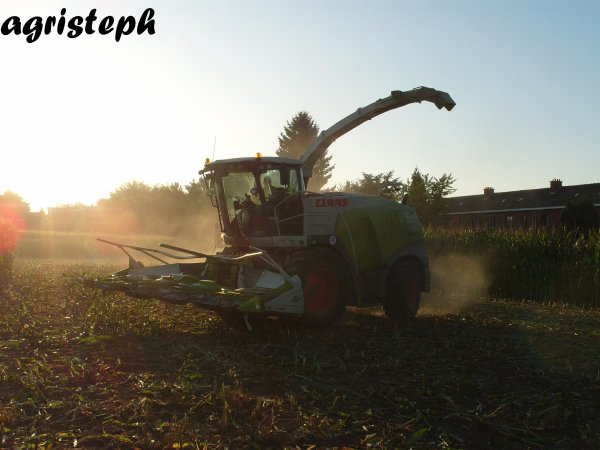 Ensilage de maïs 09 chez Royer avec Genot