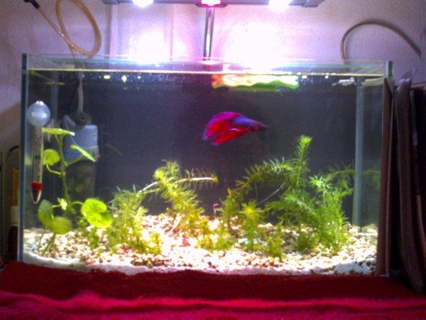 l'aquariophilie une autre de mes passions