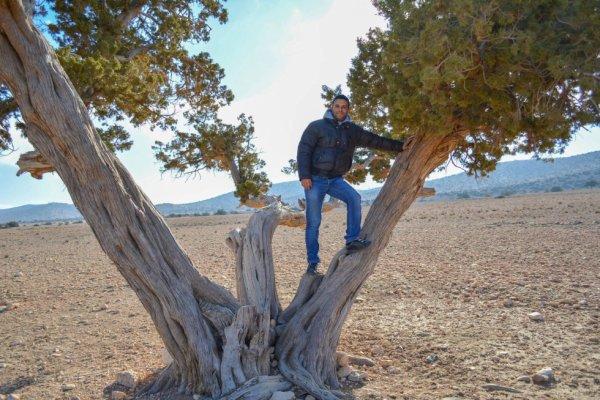 l'age de l'arbre est plus de 100 ans