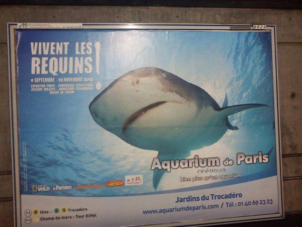 vive les requin
