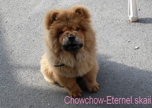 .. • |[ Chowchow-Eternel.skaii ]| •  ~>  Siara  <~                   • |[ Chowchow-Eternel.skaii ]| • ..