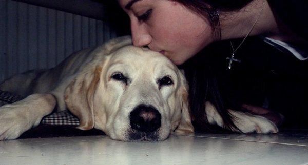 L'amour d'un chien pour son maitre est l'amour le plus fidele qu'il soit