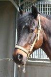 Photo de equitation62