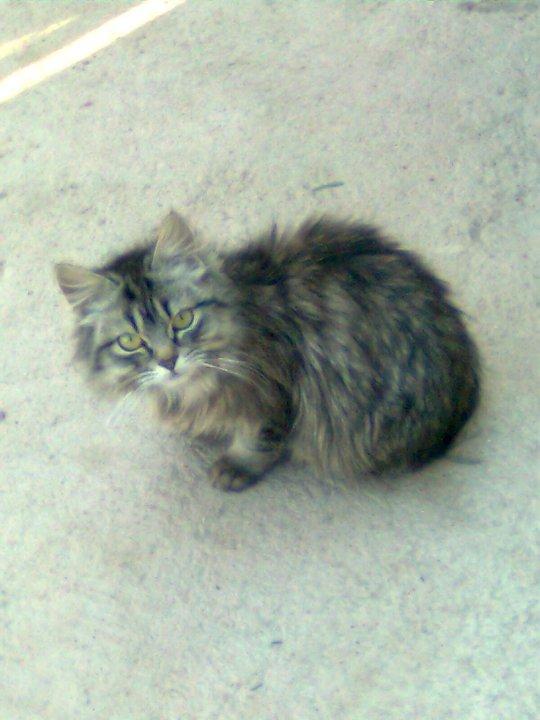 el gato de mi hermana