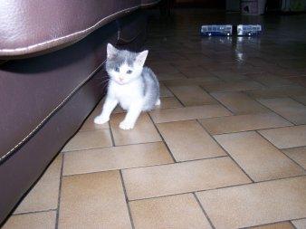 voici mon petit chat