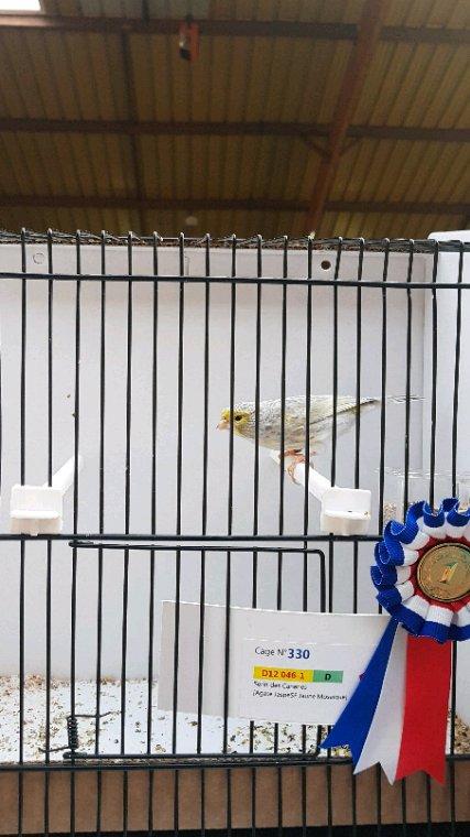 Male jaspe champion 92p