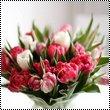 pack ; fleurs.