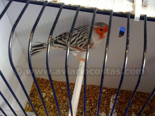 MUNDIAL DE ALMERÍA 2012 - FOTOS DE CANARIOS