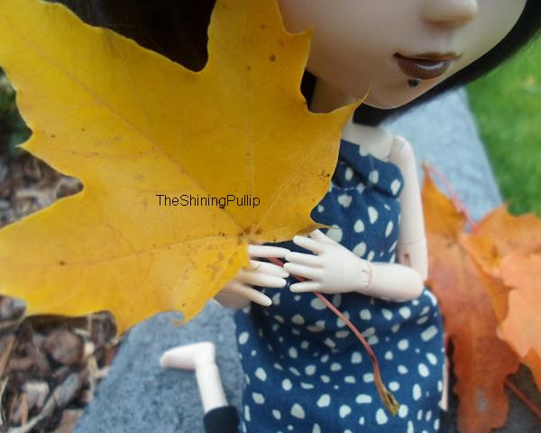 C'est l'automne ! (1)