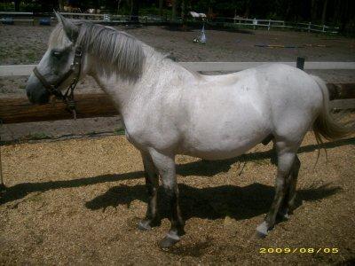 un poney une fille ....