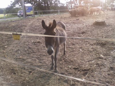 les ânes ^^