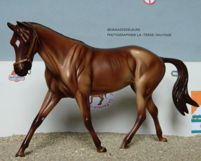 Présentation des chevaux :