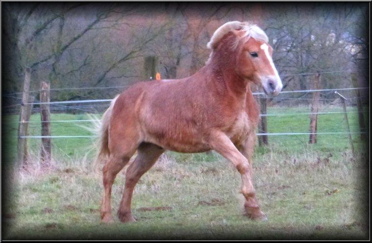 ಬ. Le cheval idéal n'est pas le cheval parfait, c'est juste celui dont on n'aime tout, même ses défauts .ಬ