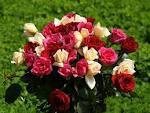 L'important, c'est la rose