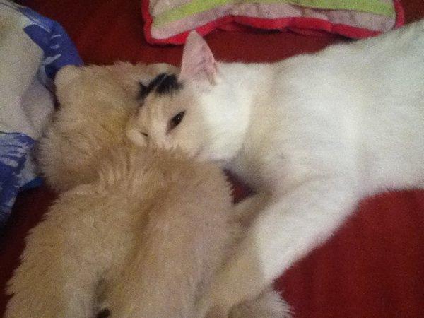 Il a un doudou my cat mimi