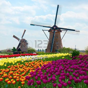 moulin à vent: deux moulins à vent hollandais sur les lignes de champ de tulipes, Pays-Bas