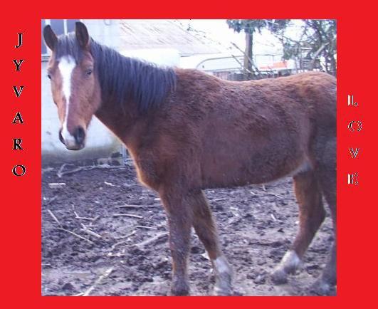 Blog de love-ds-chevaux