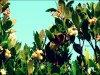 Papillons L'effet Papillon..