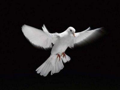 Voir ce monde... Comme la colombe