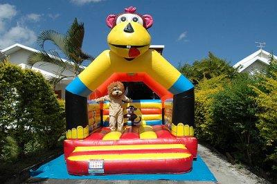 Le lion Léo s'amuse dans le chateau