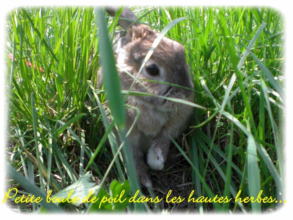 Blog de Lapin-noisette