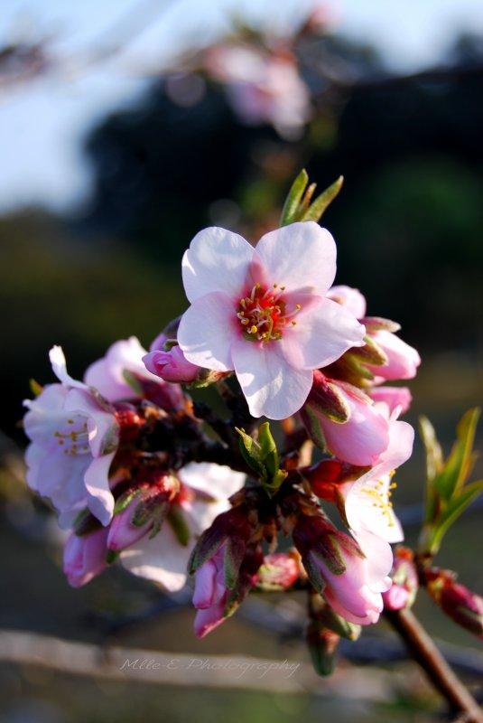 Ma Fleur Amitié.