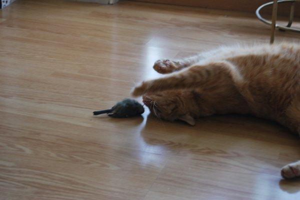 Canaille et son oiseau.