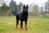 un des chiens que je voudrais