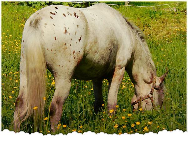 Catégorie : Equin ~ Pseudo : Galopons -  Titre : Nobilis equus umbra quoque virgae regitur.