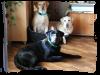 Catégorie : Canin ~ Pseudo : Lovenoise -  Titre : Génoise et Loven.