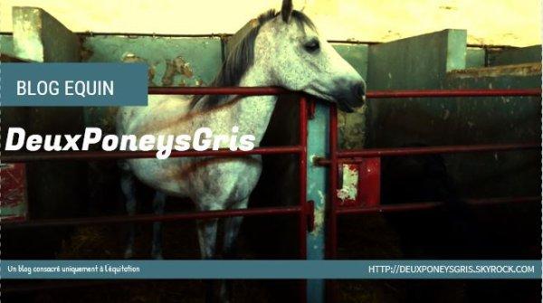 ► DeuxPoneysGris - Une vie de cavalière. Catégorie : Equin ~