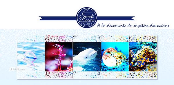 ► SecretsDocean - A la découverte du mystère des océans Catégorie : Sauvages ~
