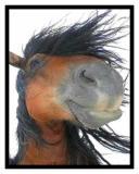Photo de horse-mania30