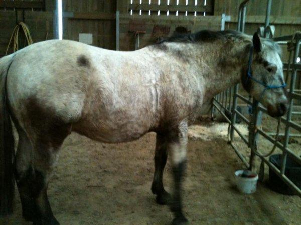 15 février : Après une Saint-Valentin avec mon amoureux, une Saint-Valentin avec mon cheval :3
