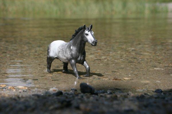""""""" L'air du paradis est celui qui souffle entre les oreilles d'un cheval """" (1/2)"""