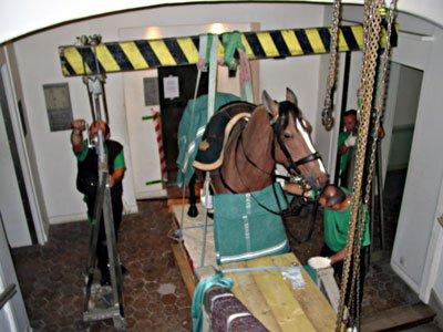 Le cheval trop rigolo blog de xloriex3 - Cheval rigolo ...