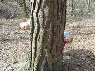 promenade au bois