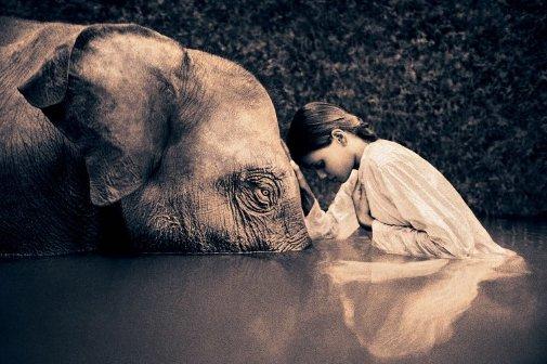 « Les éléphants, comme les femmes, n'oublient jamais une blessure. » [ Marc Shand ]