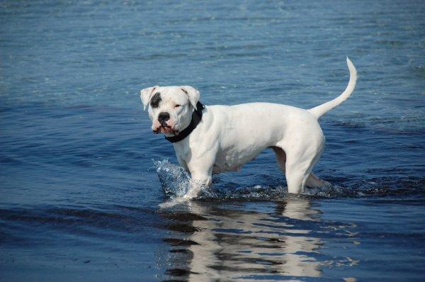 Taïga notre 1ere chienne