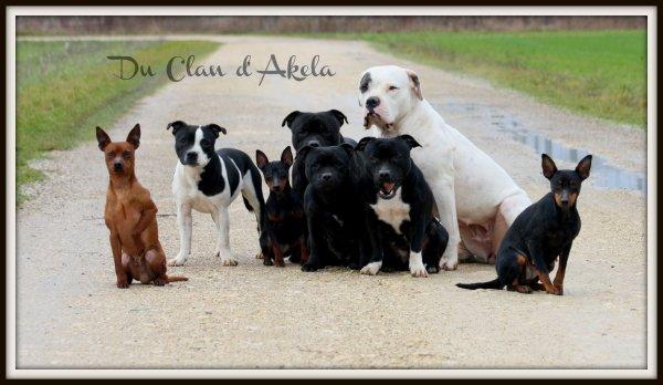 """Notre sIte d'élevage """"Du Clan d'Akela"""""""