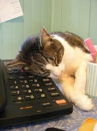 mon chat qui veux passer un coup de tellephone