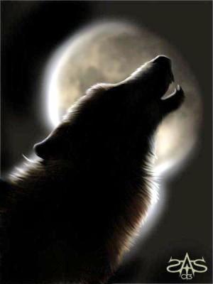 Le symbole du  loup