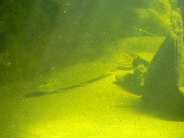 Petit tour a l aquarium du bugue (24)
