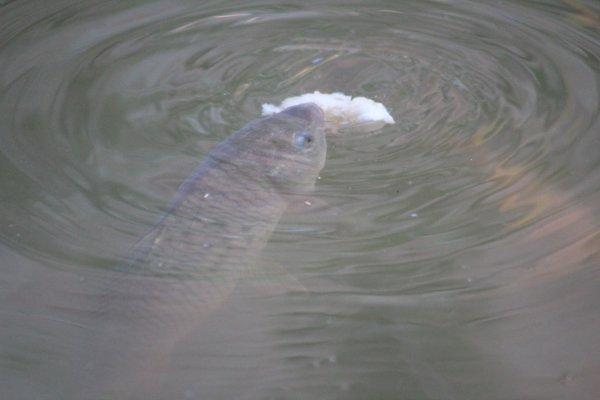 D autre photos du bassin !! Sa pousse bien  ;)